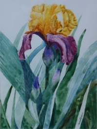 Iris solitaire